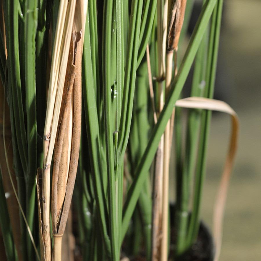 uv grasplant 120 cm detail foto