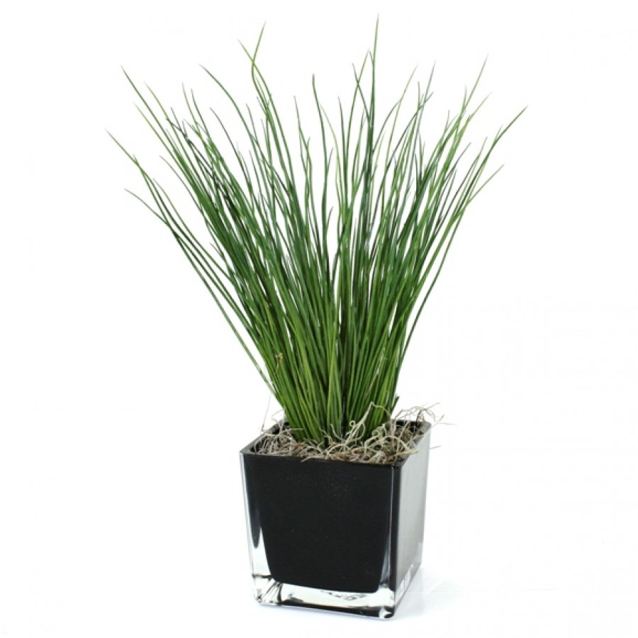 grasplant_deluxe_in_glazen_kubis_10x10cm